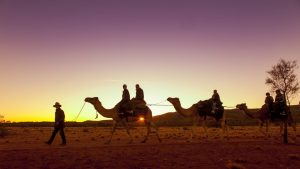 Camel train at sunset lead by Markus Williams
